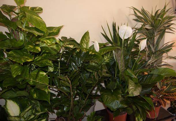 plantas-inicio