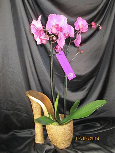 floristeria la cañada iris