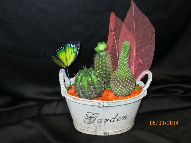 cactus la cañada